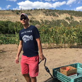 Peach picking in Paonia Colorado